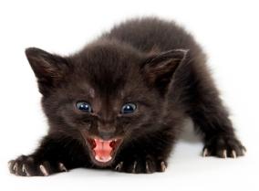 kitten_hunting